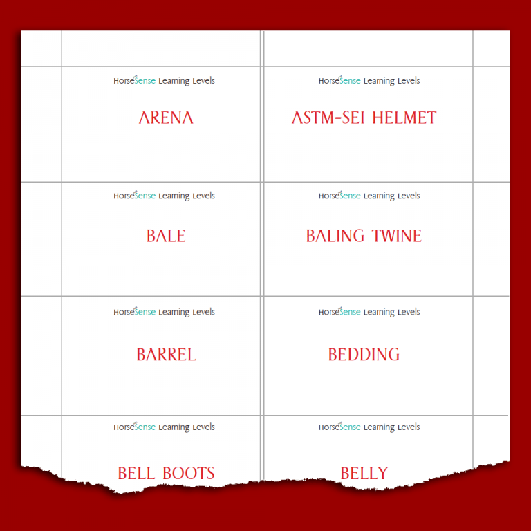 sample equine terms cards for Red HS