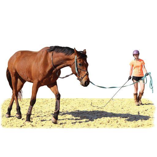 Orange Level student longeing a horse