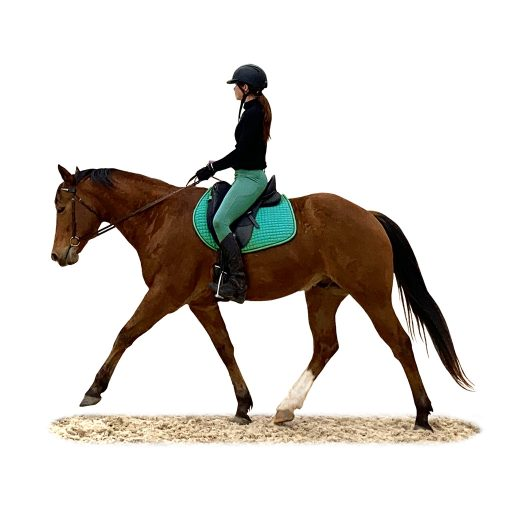 Teal Level rider - flatwork with contact