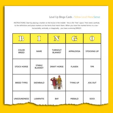 sample BINGO card for Yellow HS equine terminology