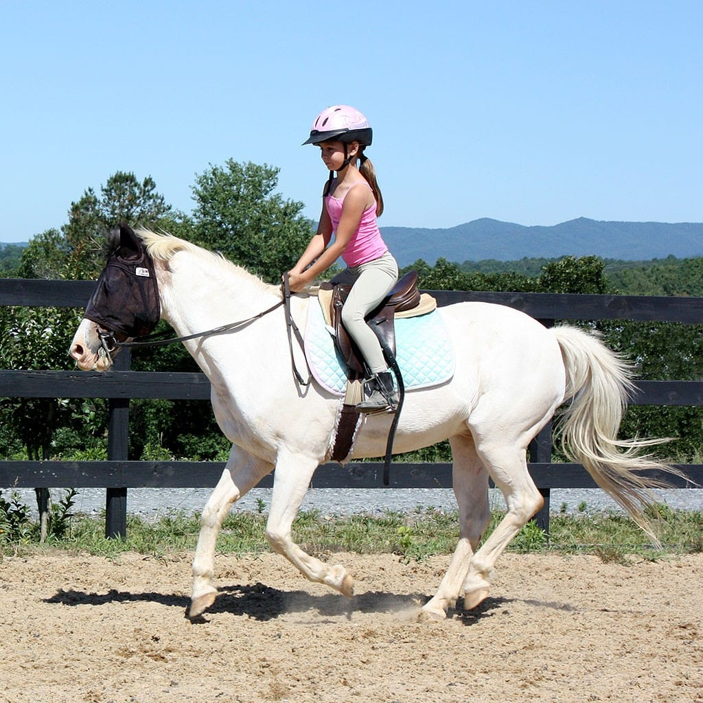 student cantering horse along arena rail