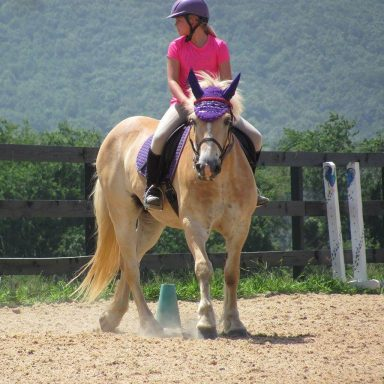 student riding horse through equitation patterns