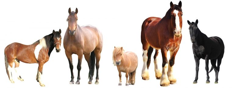 lesson horses of different breeds and sizes