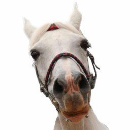 horse looking perplexed
