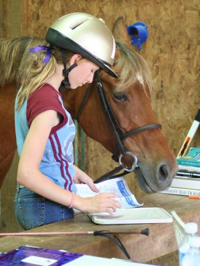 Student - and horse! - study for dressage test lesson