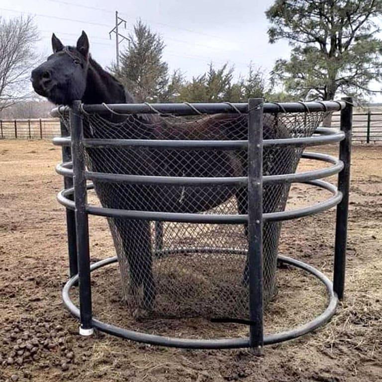 horse in hay net inside hay ring