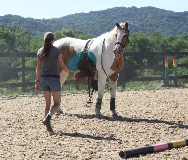 lesson horse with loose girth