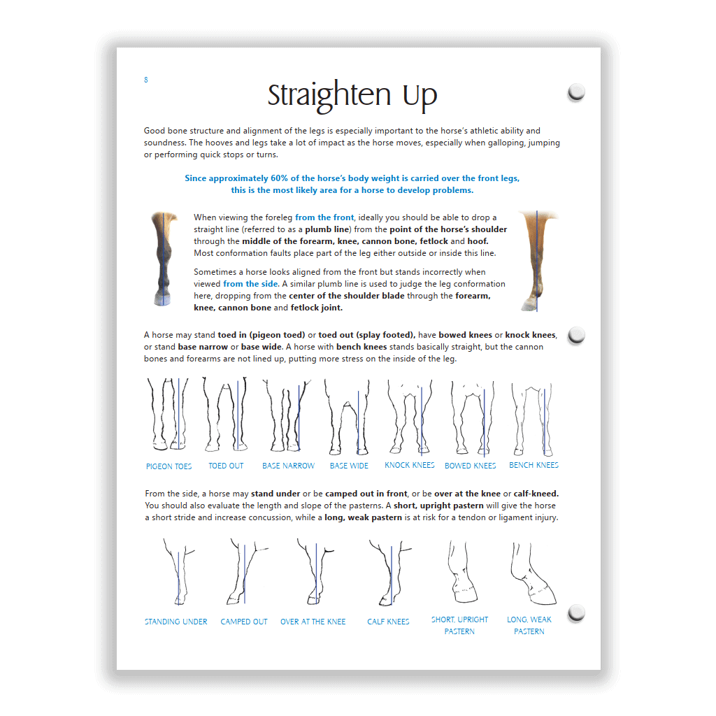 Blue HS study guide - foreleg conformation page