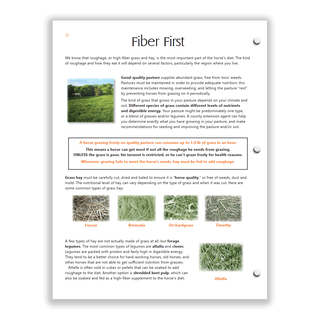 Orange HS Study Guide sample page - types of forage